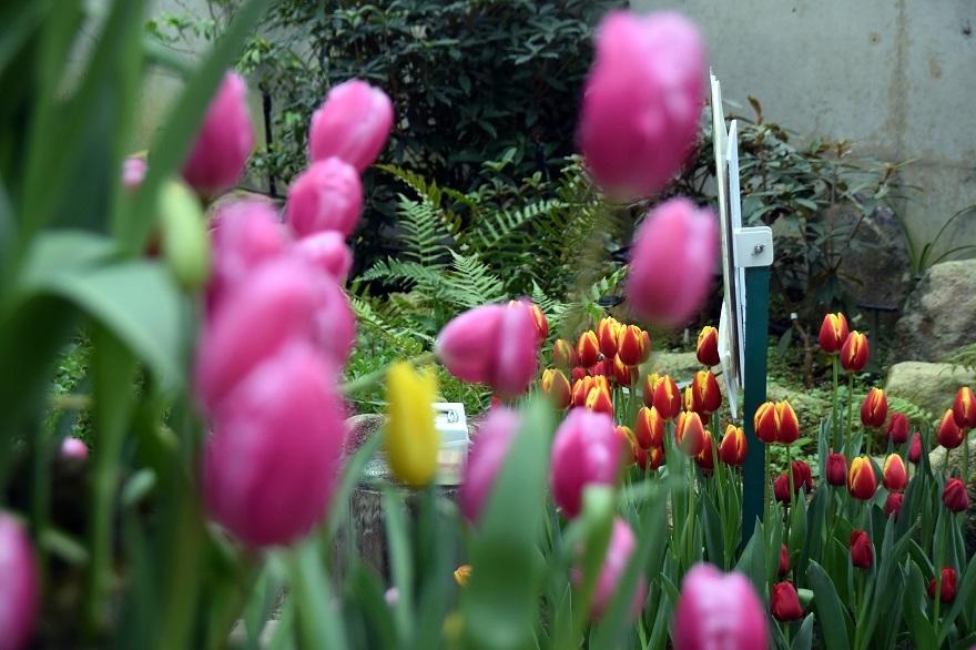 花の文化園・大温室2020 (20)