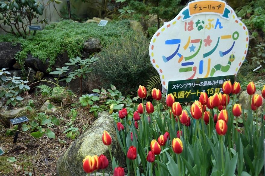 花の文化園・大温室2020 (24)