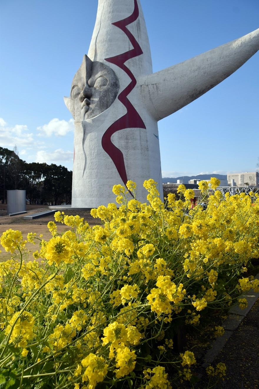 太陽の塔と菜の花 (1)