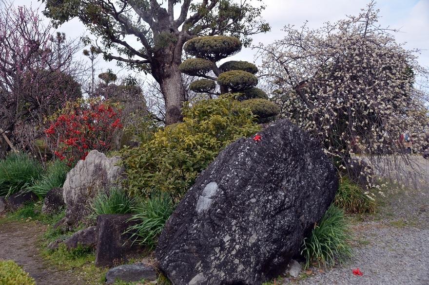 和泉・日本庭園20春 (0)