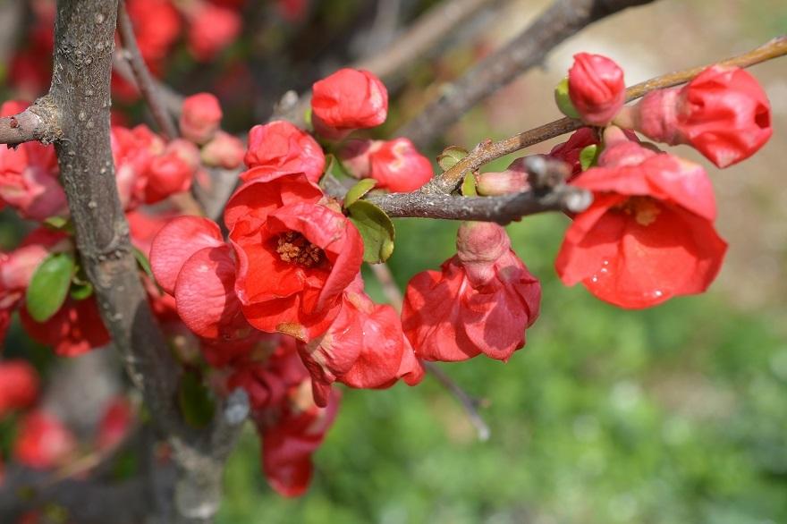 和泉・日本庭園20春 (4)