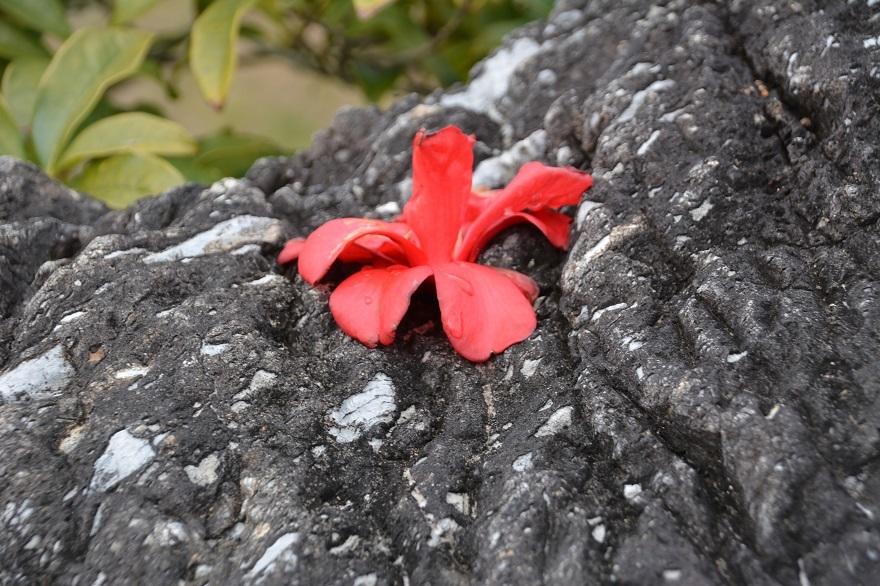 和泉・日本庭園20春 (2)