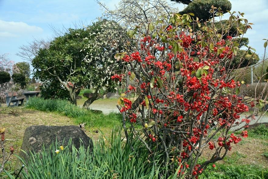 和泉・日本庭園20春 (3)