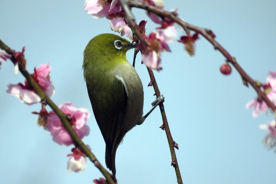和泉・日本庭園20春 (007)