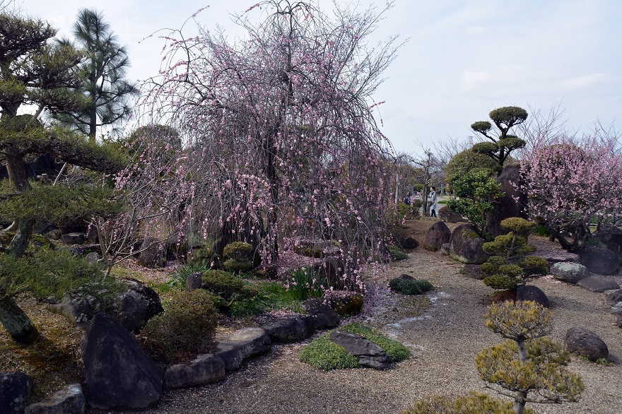 和泉・日本庭園20春 (8)