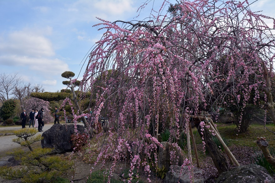 和泉・日本庭園20春 (9)