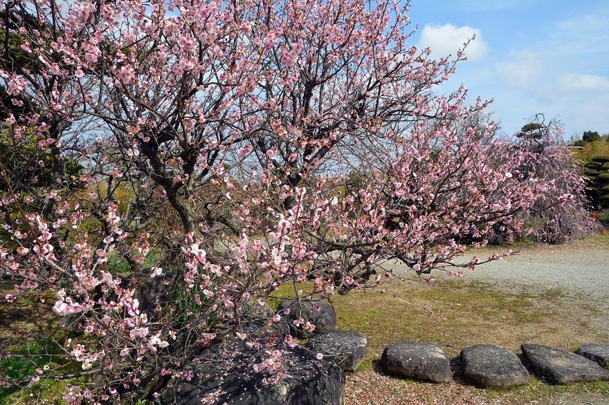 和泉・日本庭園20春 (10)