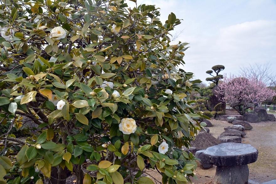 和泉・日本庭園20春 (12)