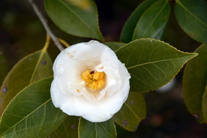 和泉・日本庭園20春 (13)