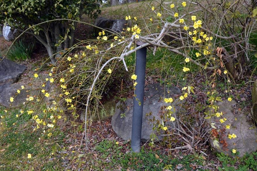 和泉・日本庭園20春 (17)