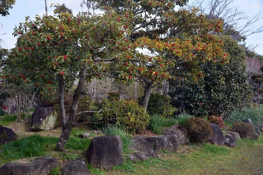 和泉・日本庭園20春 (19)