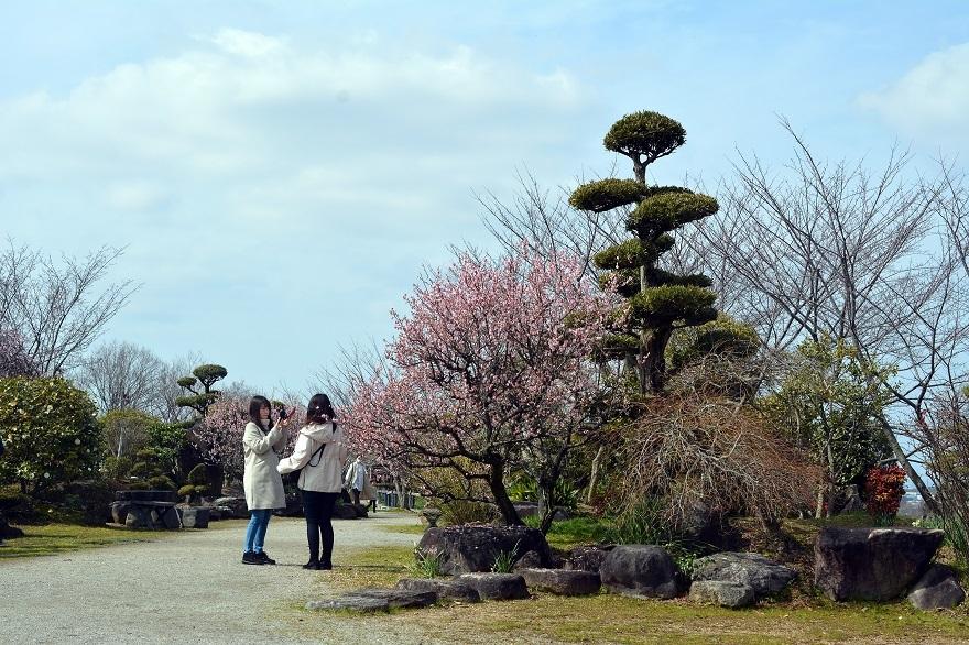 和泉・日本庭園20春 (23)