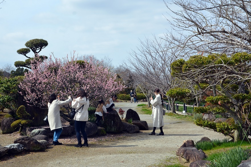 和泉・日本庭園20春 (24)