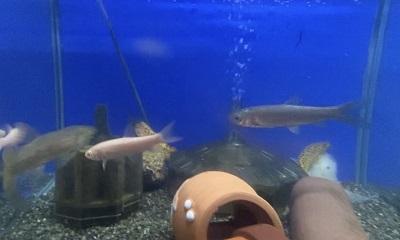 草魚0804