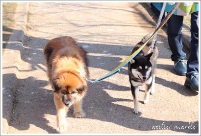 シニア犬とパピー