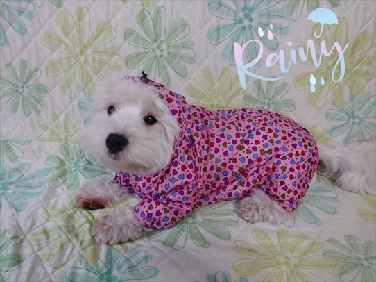 raincoat1.jpg