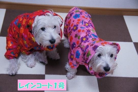 raincoat8.jpg