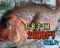 resize39919.jpg