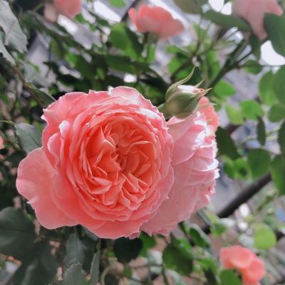 ブログ5月☆彡ロマンティックチュチュ2