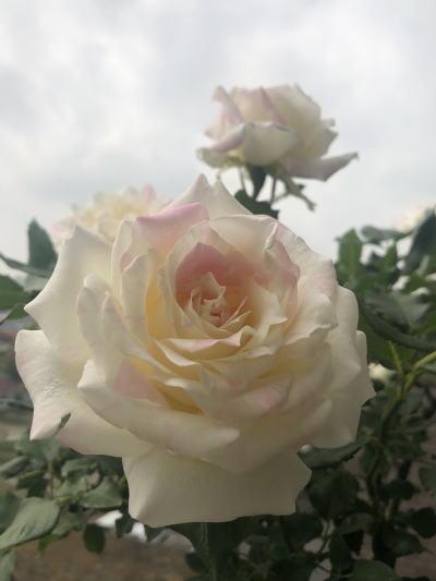 ブログ5月☆ミルフィーユ