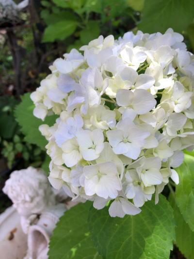ブログ6月紫陽花
