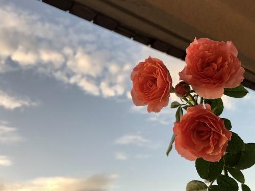 ブログ9月ロマンティックチュチュ