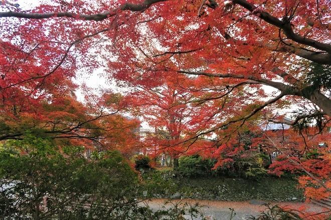 瑠璃光院の紅葉(1)