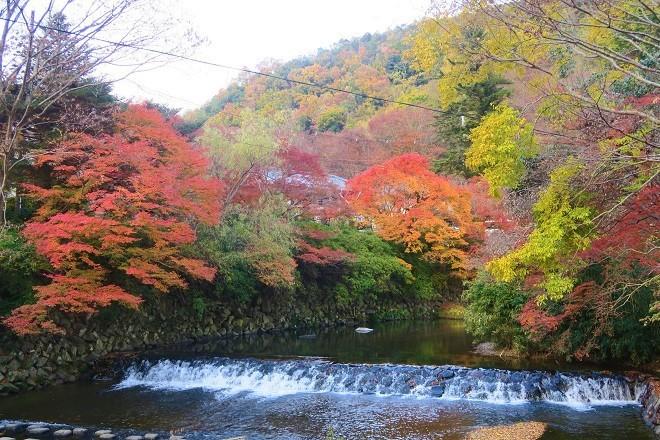 瑠璃光院の紅葉(2)