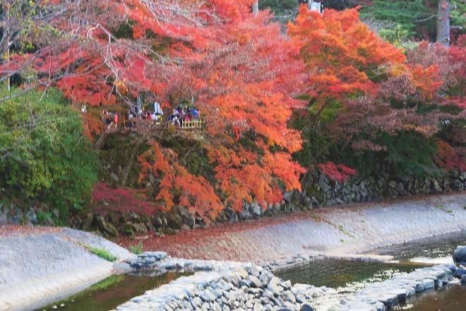 瑠璃光院の紅葉(4)