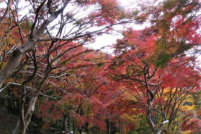 瑠璃光院の紅葉(5)