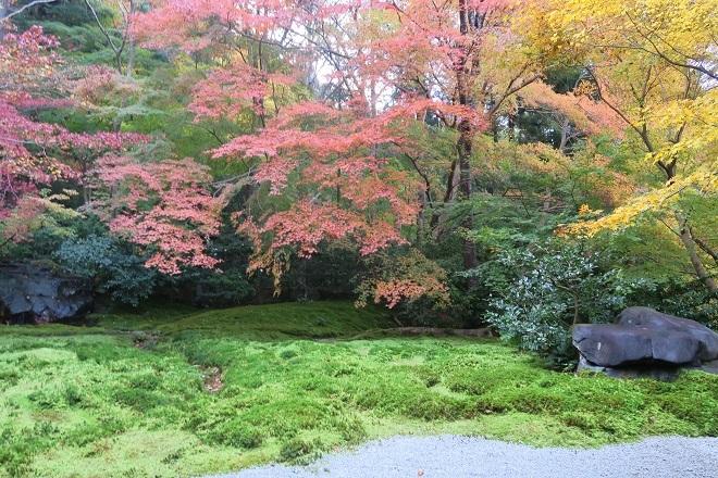 瑠璃光院の紅葉(11)