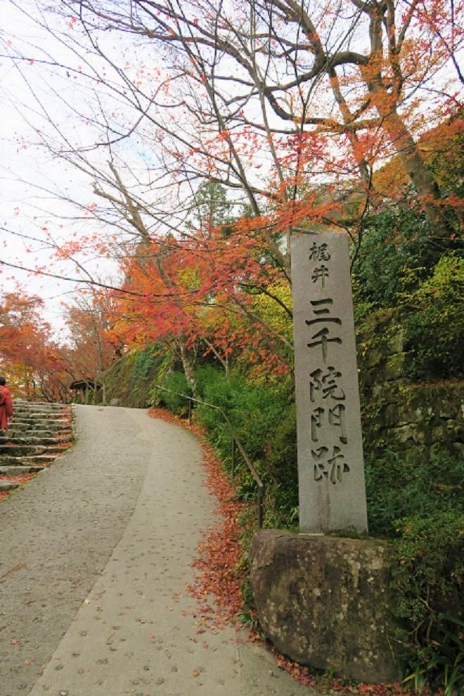 三千院の紅葉(1)