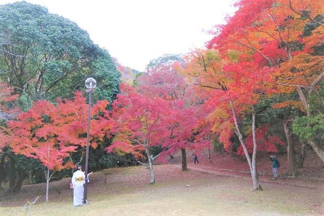 嵐山紅葉(7)