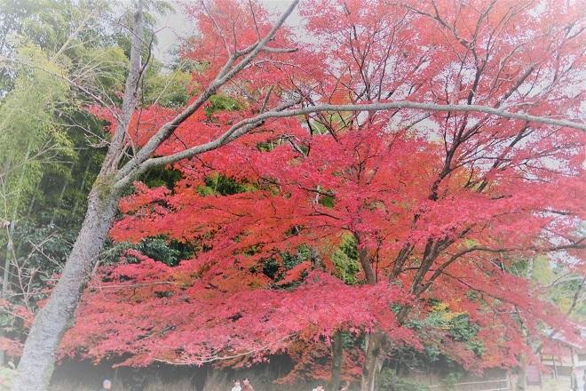 嵐山紅葉(8)