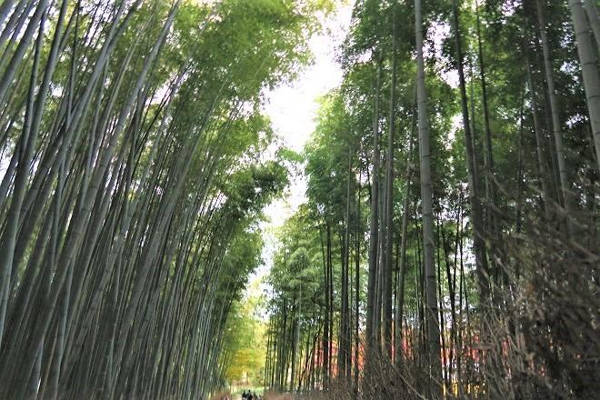 嵐山紅葉(11)