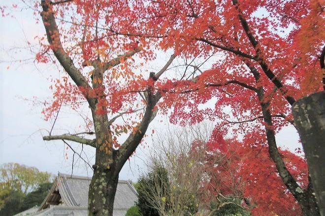 嵐山紅葉(12)