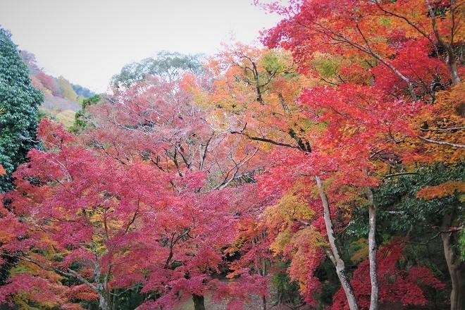 嵐山紅葉(6)