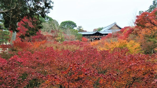 東福寺「臥雲橋」から見た紅葉(1)