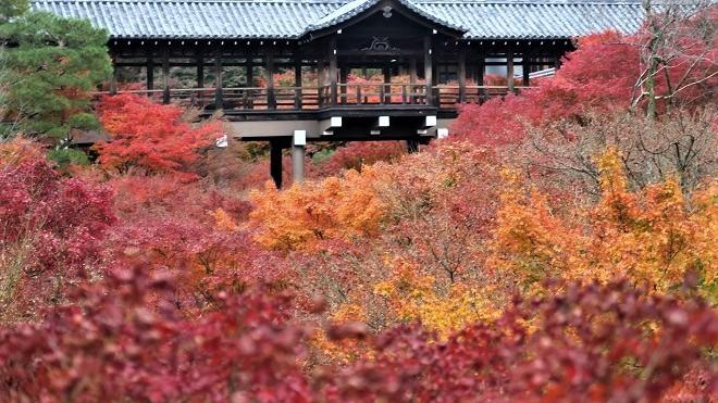 東福寺「臥雲橋」から見た紅葉(2)