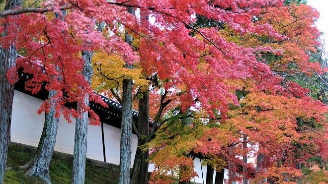 東福寺「日下門」周辺の紅葉(1)