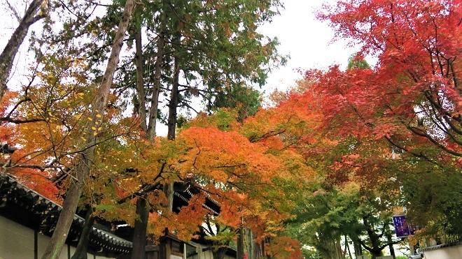 東福寺「日下門」周辺の紅葉(2)