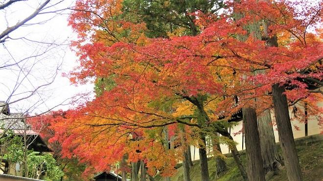 東福寺「日下門」周辺の紅葉(3)