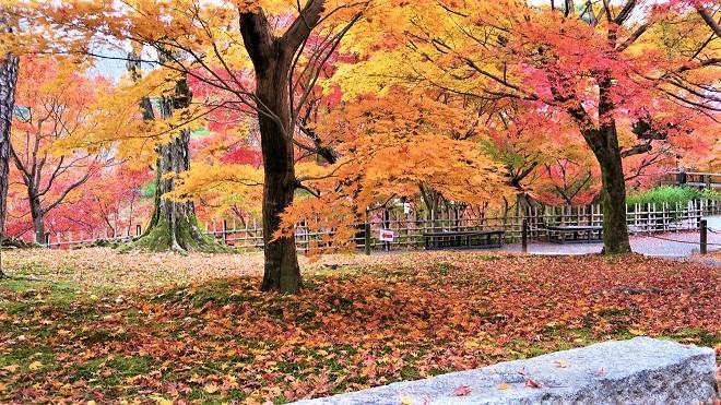 東福寺境内の紅葉(1)