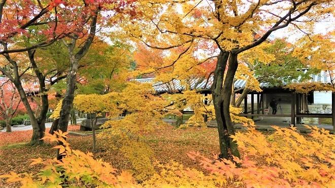 東福寺境内の紅葉(2)