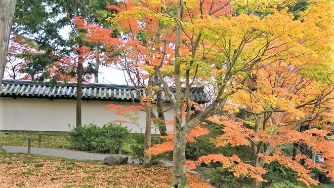 東福寺境内の紅葉(3)