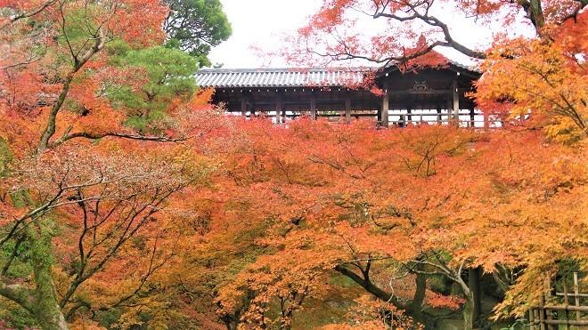 東福寺境内の紅葉(4)