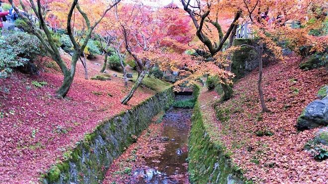 東福寺境内の紅葉(5)