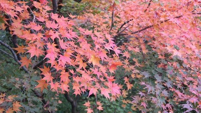 東福寺方丈庭園の紅葉(3)