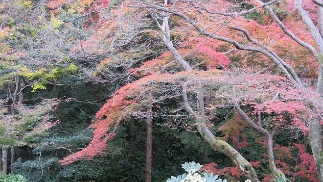 東福寺方丈庭園の紅葉(5)