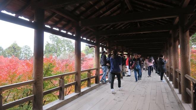 東福寺「通天橋」から見た紅葉(1)